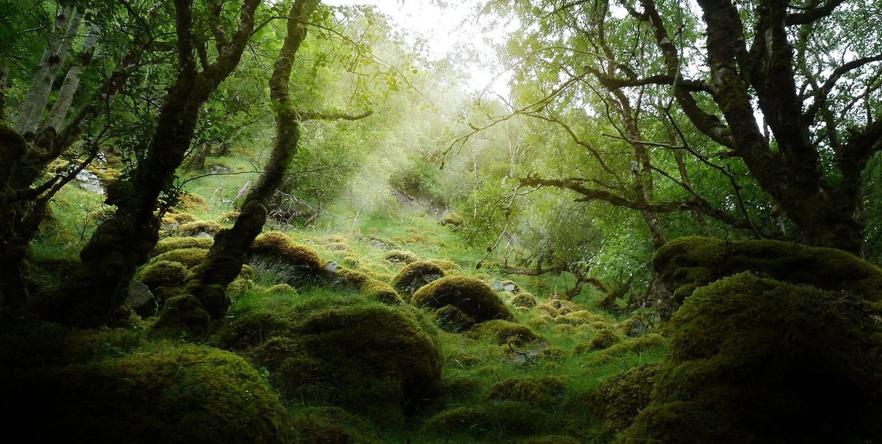 scottish_primeval_forest_by_max702